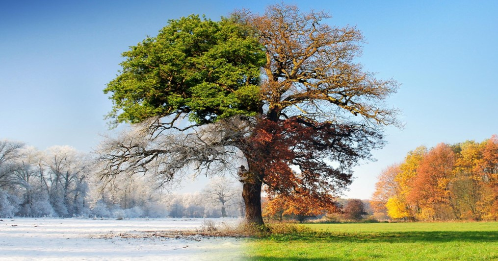 ein55-newsletter-no-042-image-4-seasons-tree